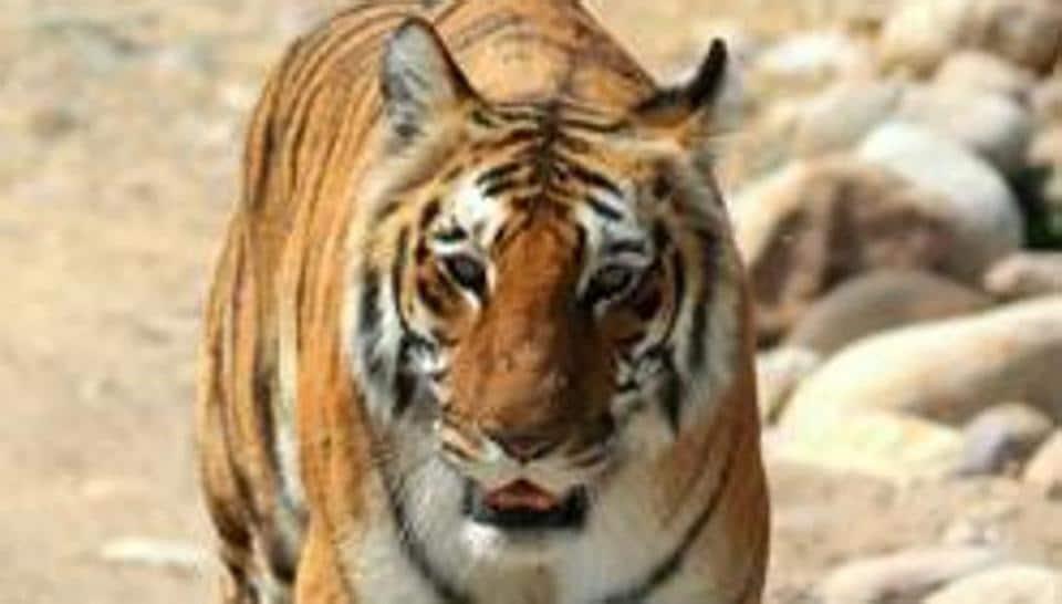 Human-tiger conflict,Corbett,buffer