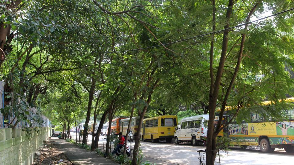 MMRDA,trees cutting in Mumbai Thane,Thane infra project