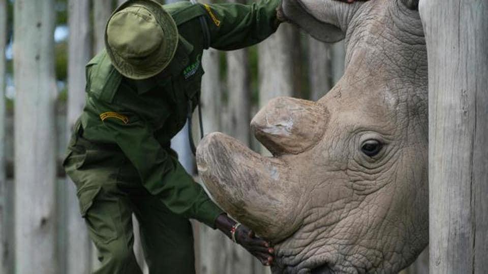 Scientist,rhino,conservation