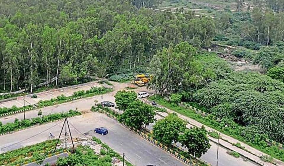 The authority had planned to fell 3,000 eucalyptus trees from the city forest in Sector 91 to develop the park