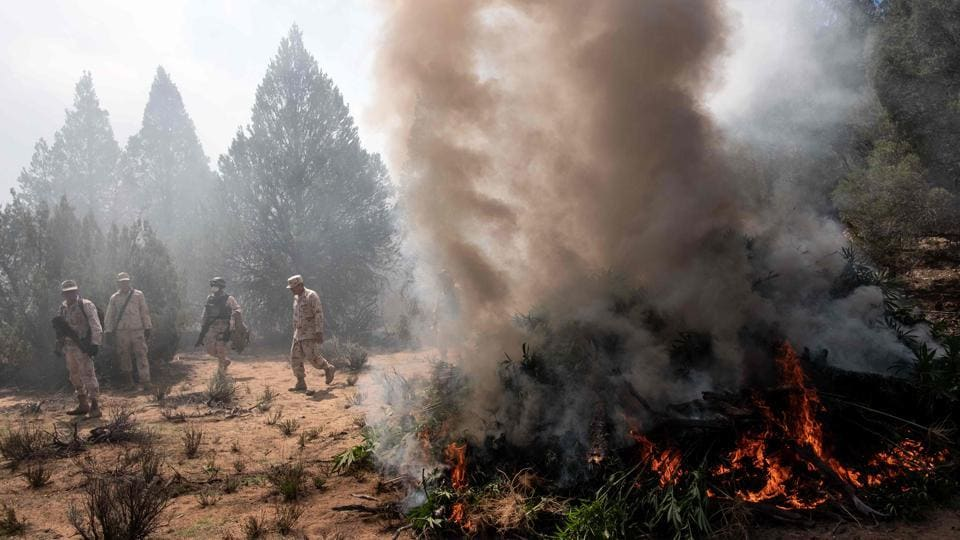 Mexican soldiers burn a marijuana plantation near La Rumorosa town in Tecate, Baja California state, Mexico, destroying two plantations with a total surface area of 19,000 square meters. (Guillermo Arias / AFP)