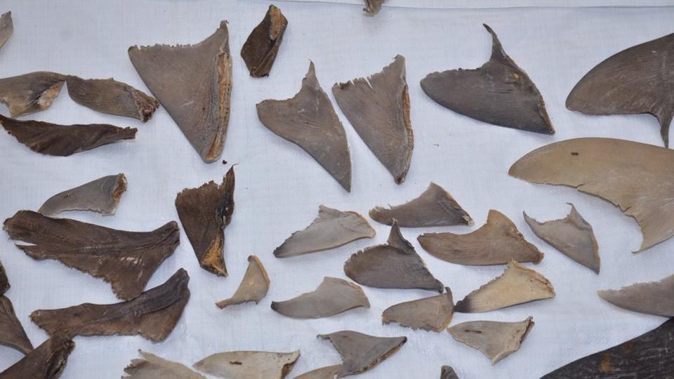 shark fins,export,Directorate of Revenue Intelligence