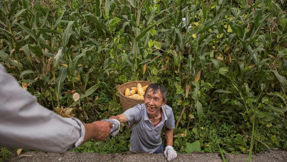 "A farmer is offered a cigarette while working in a field. Yang Yong, chairman of the Hengduan Mountain Research Society, a Sichuan-based environmental group suspects small plants are being shut down to free up grid access for bigger dams. Small hydropower plants originally had grid agreements, and if they were legal, they could connect. ""If they can't access the grid because there are many big plants, that isn't right."" (Damir Sagolj / REUTERS)"