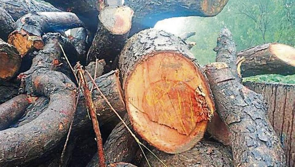 Forest department,Illegal tree felling,Neem tree