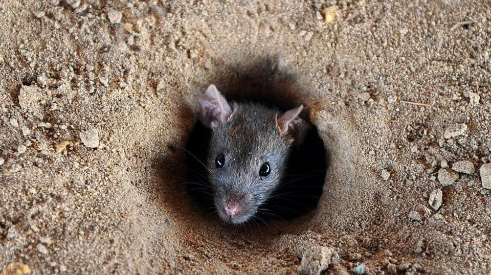 rats in UP bank,rats in bank,UPbank