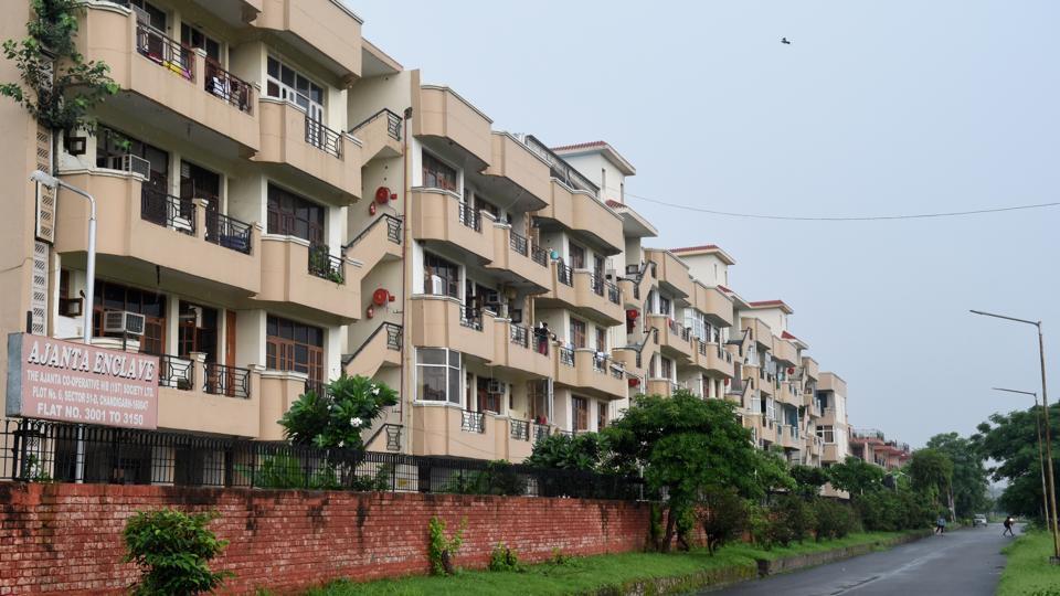 Chandigarh,Kikkar trees,Chandigarh's Sector 50-51