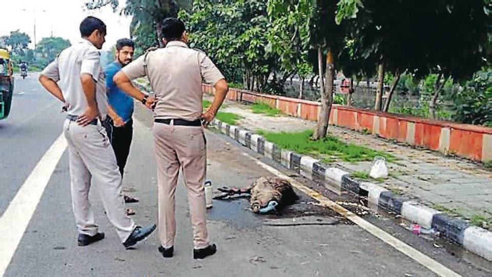 Emu,Delhi Police,Wildlife department