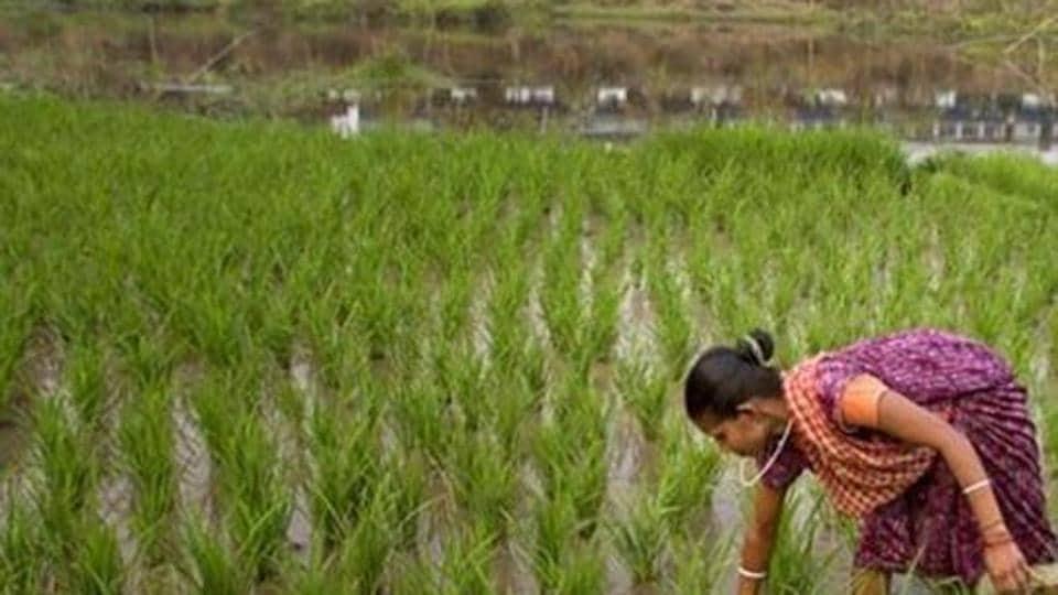 Kharif crop,Summer sown crops,Kharif season