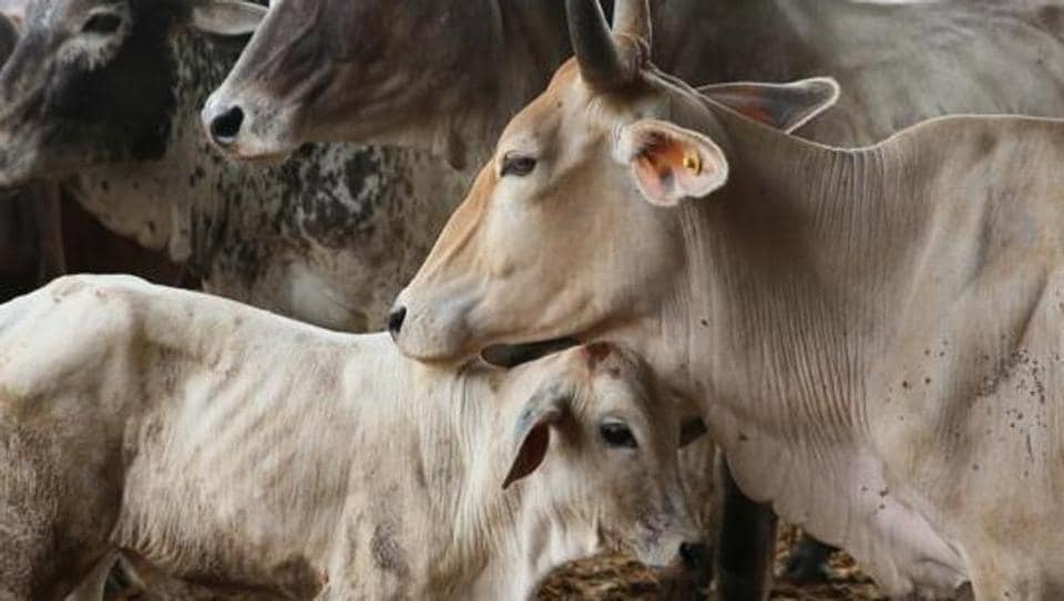 Cow disease,Foot and mouth disease,Cow