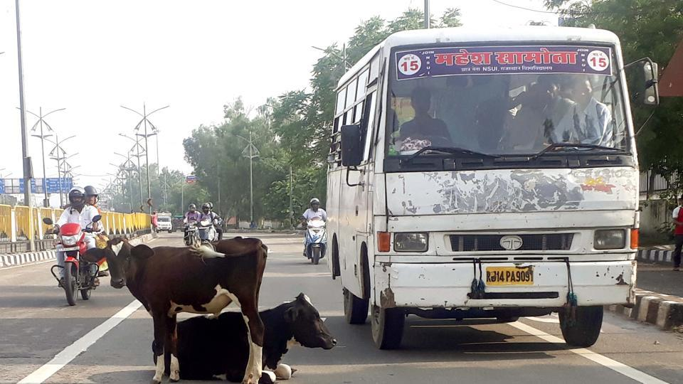 Bull,Cow slaughter,Tension