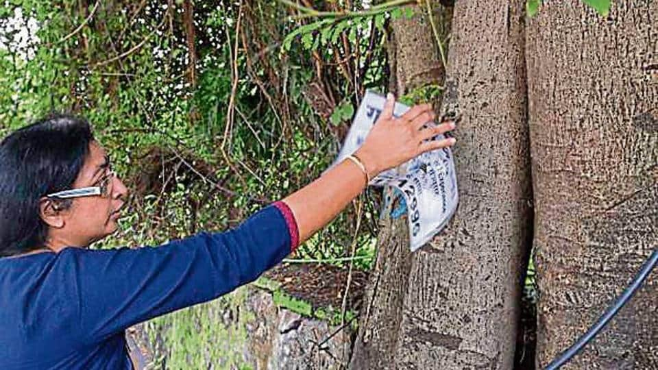 Housewives,Tree cutting,BMC