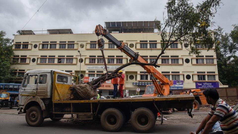 As metro work progresses in the city, workers from the Maha­-Metro transport a tree from Paud road near MIT college to a suitable location, on Tuesday. (SANKET WANKHADE/HT PHOTO)