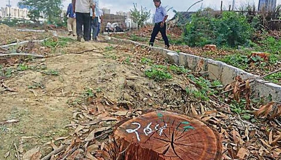 The department has counted six trees (other than eucalyptus) that were felled without permission.