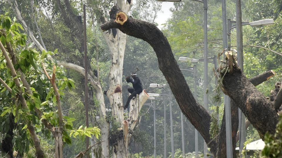 Delhi trees,Delhi tree cutting,Tree plantation