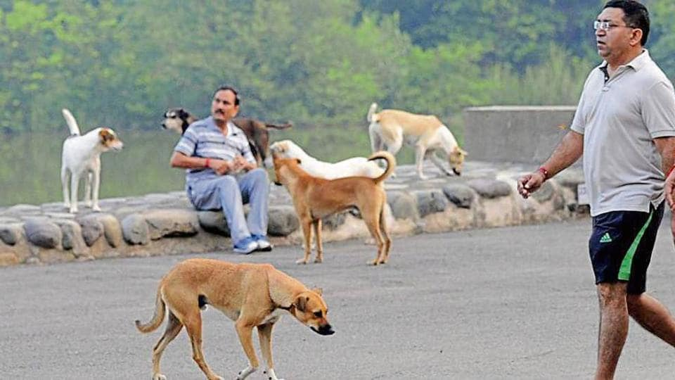 dogs,street dogs,pet adoption