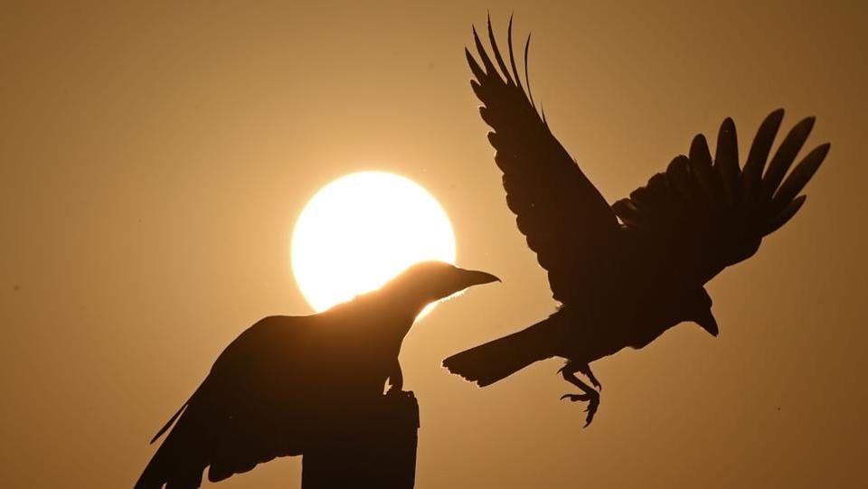 Crows are silhouetted during a sunset on Dal lake in Srinagar, Jamu and Kashmir on September 12, 2018. (Tauseef Mustafa / AFP)