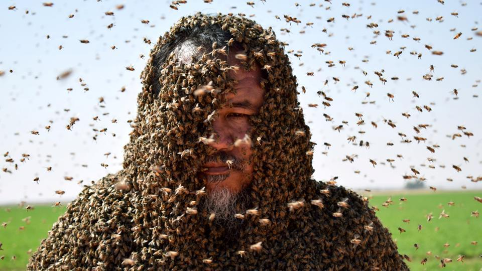 A Saudi man with his body covered with bees poses for a picture in Tabuk, Saudi Arabia. (Mohamed Al Hwaity / REUTERS)