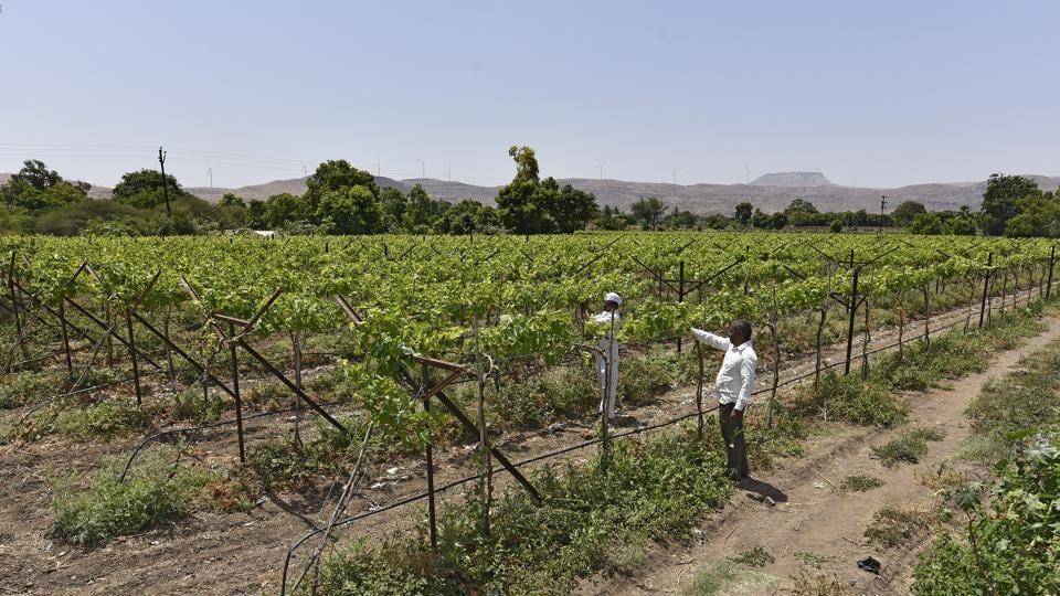 Supreme Court,Farmers,Pesticide ban