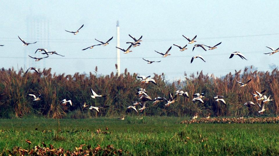 Activist Vikrant Tongad had filed the case in the NGT, and had marked six areas near the Surajpur wetland, claiming that these were part of the wetland's connection channel.