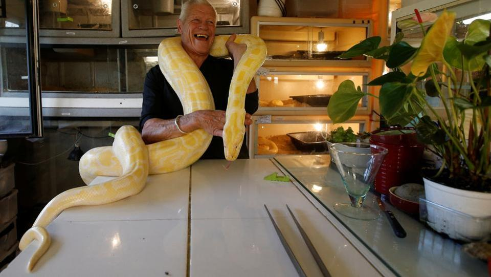 Gillet poses with a python in his house. He insists that locals do not mind their unusual neighbours and regularly pop in for coffee, safe in the knowledge that the most dangerous snakes are kept in a room behind two sets of doors. (Stephane Mahe / REUTERS)
