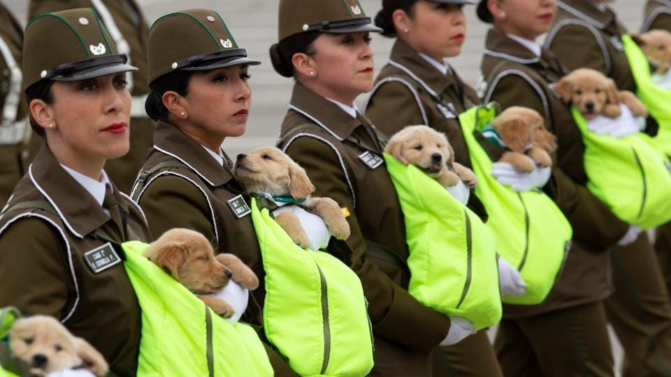 Chilean female police officers march with puppies, future police dogs, during the celebration parade of Chile's 208th Independence anniversary, in Santiago. (Claudio Reyes / AFP)