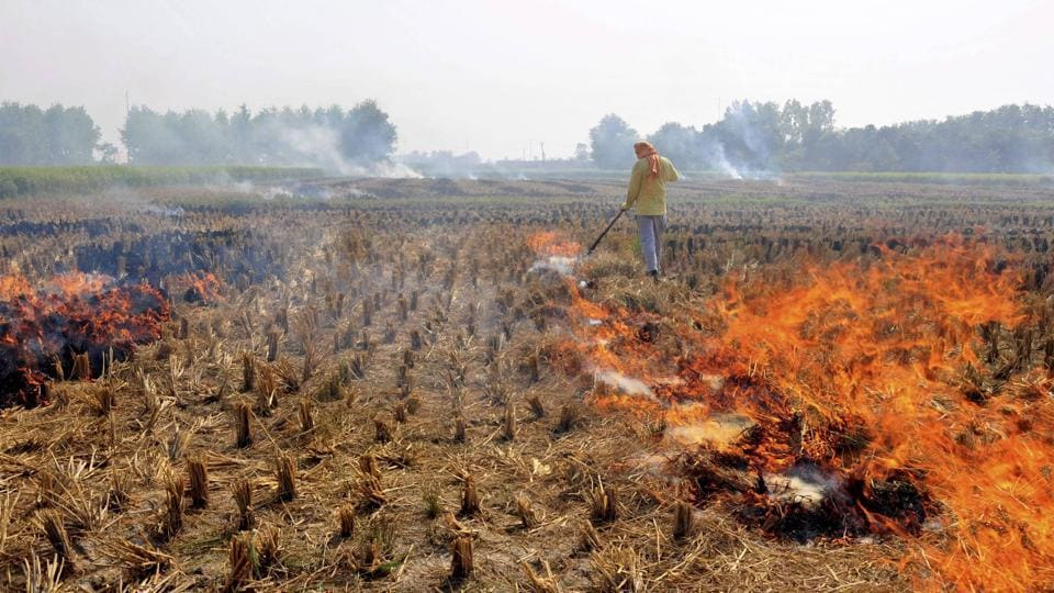 Over the past week, at least 61 cases of stubble burning have been detected in Haryana, and two in Punjab