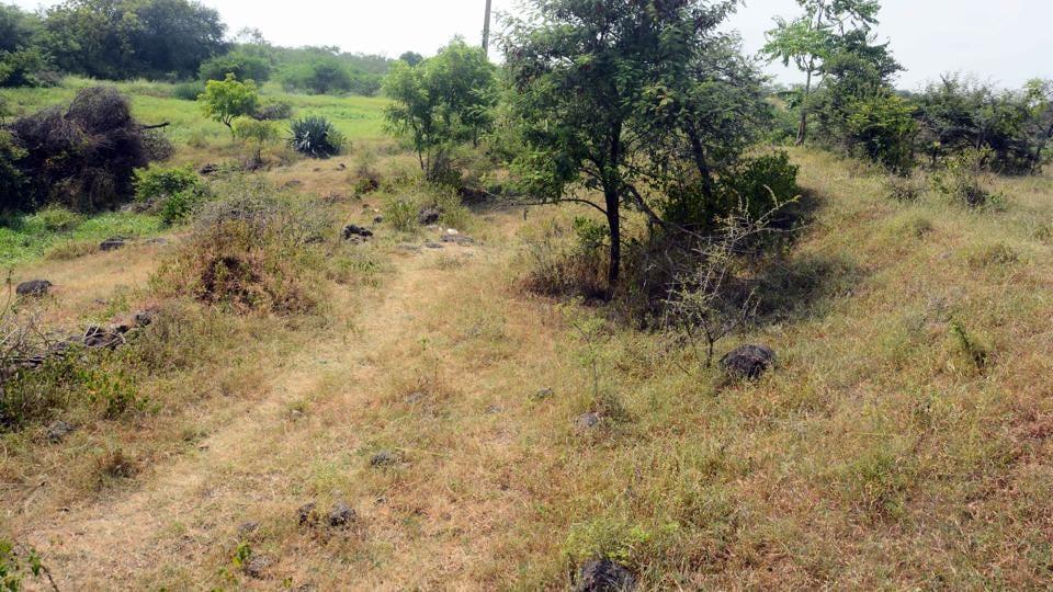 pune,kharadi,forest park lohegaon