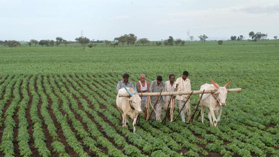 Maharashtra,Pune,Farmers