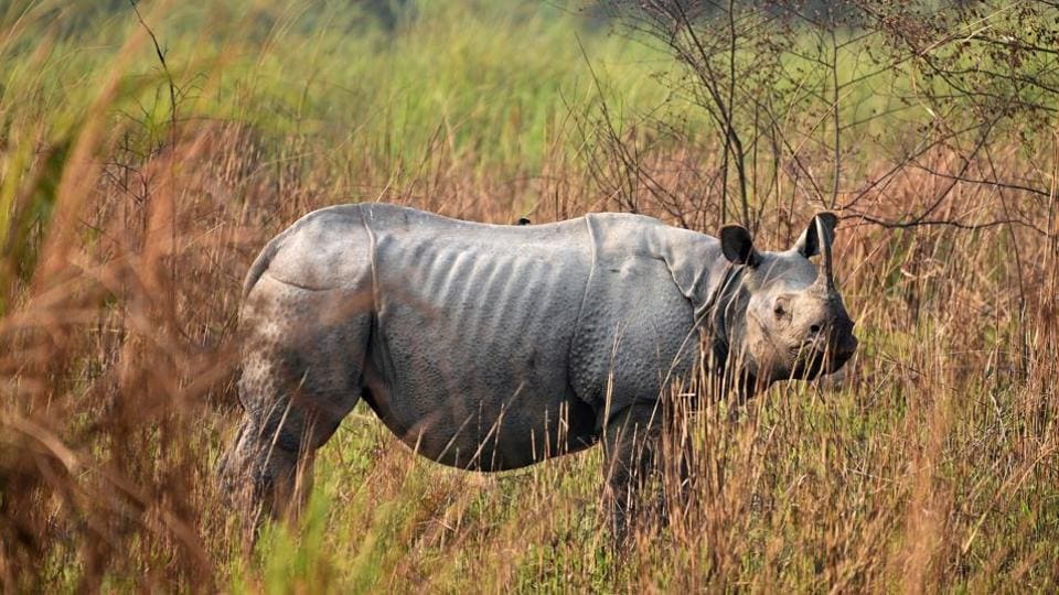 How Four Rhinos Became Symbol Of China Nepal Relations World News
