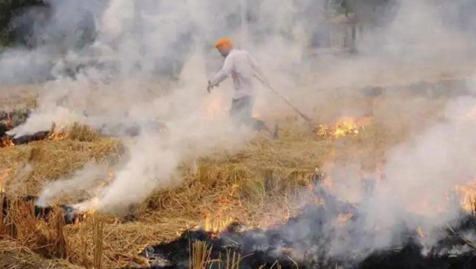 Punjab,Punjab govt,stubble burning