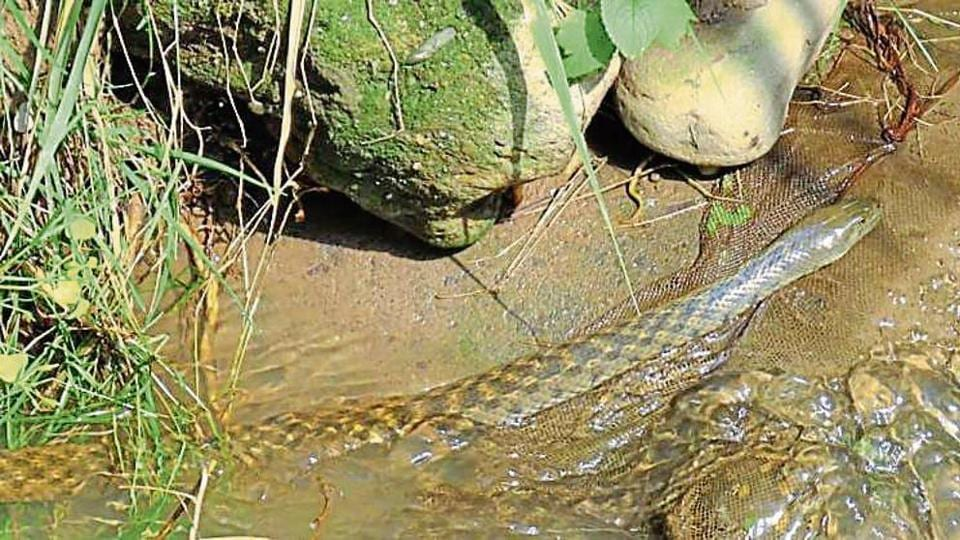 Wildbuzz,snake,wildlife