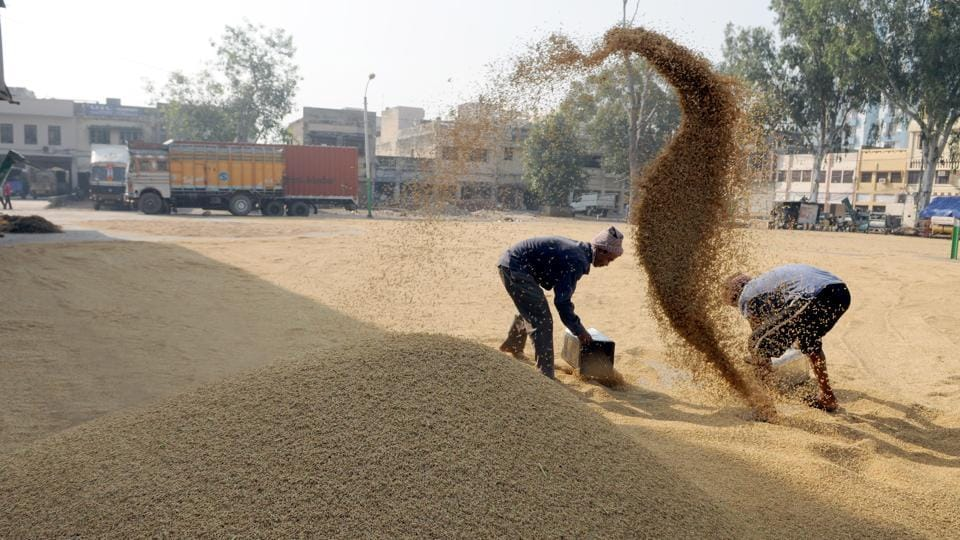 1,834 purchase centres have been set up in the state for smooth procurement of paddy. The Centre has fixed the minimum support price (MSP) for paddy at Rs 1,770 per quintal for grade A and Rs 1,750 per quintal for the common variety of paddy. (Pardeep Pandit/HT Photo)
