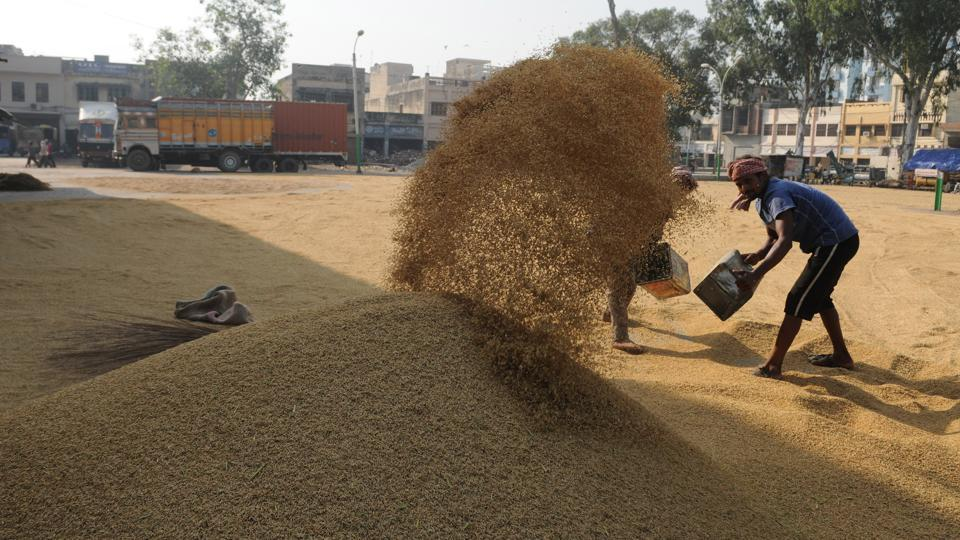 A proposal for cash credit limit has been sent by the state finance department to the Reserve Bank of India (RBI) for availing Rs 40,300 crore for paddy purchase. The FCI will make its own arrangements for funds, according to a spokesperson.  (Pardeep Pandit/HT Photo)