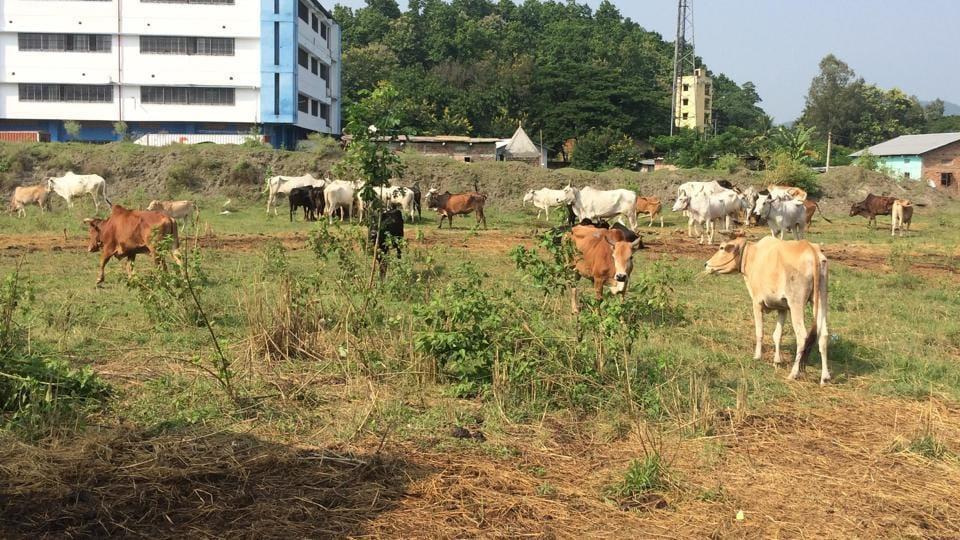 Assam,police,cattle