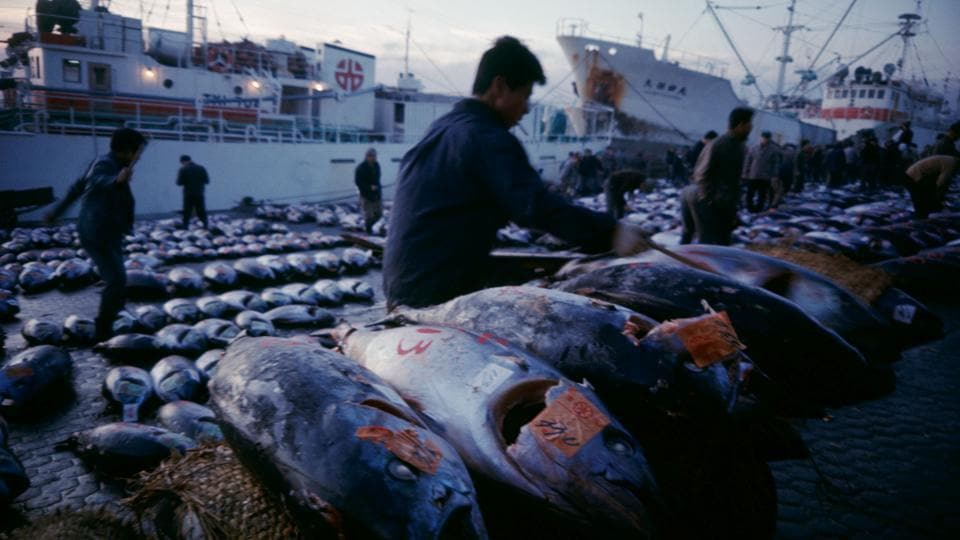 Tuna fish are landed from boats at the market in Tokyo on December 8, 1988. Many fishmongers want to stay in this area where they also live. They worry about contaminated soil at the new site in Toyosu, and the difficult commute to the new market. More than 80% of Tsukiji fish traders are opposed to the move, said a survey by a group fighting the relocation. (Tokyo Metropolitan Government/Handout via REUTERS)