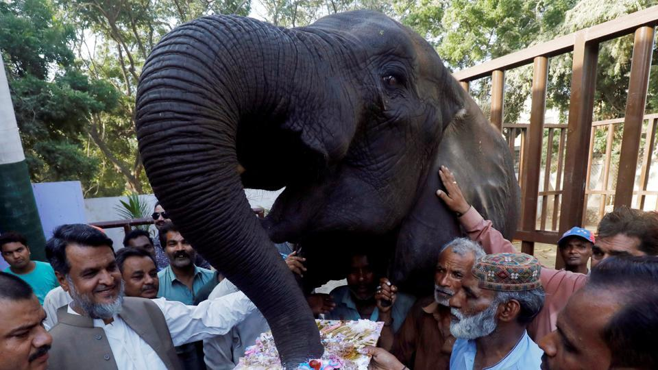 Zoo staff gather as a female elephant named Noor Jahan eats cake on the occasion of her 14th birthday celebrations at the Zoological Garden in Karachi, Pakistan. (Akhtar Somroo / REUTERS)