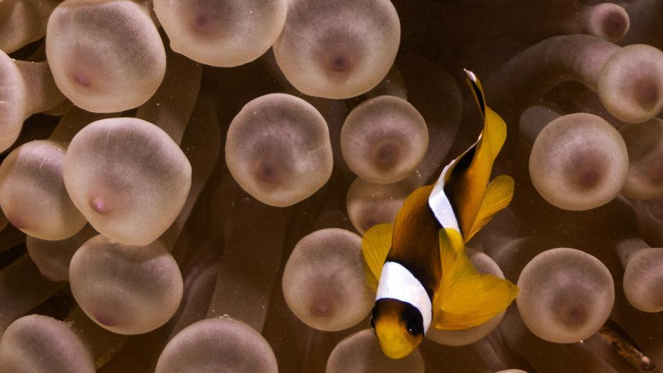 A clownfish swims through anemones in the Egyptian Red Sea marine reserve of Ras Mohamed. (Emily Irving-Swift / AFP)