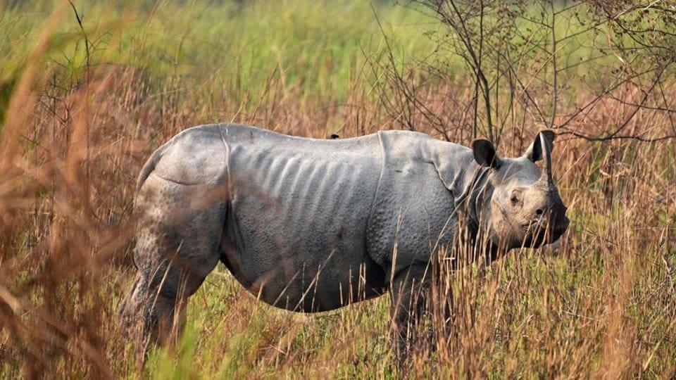 Wildlife Institute of India,rhino,DNA