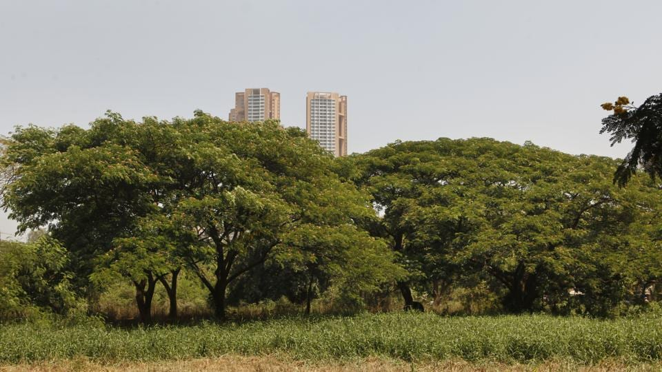 Aarey has been in controversy ever since the Metro-3 project took off.