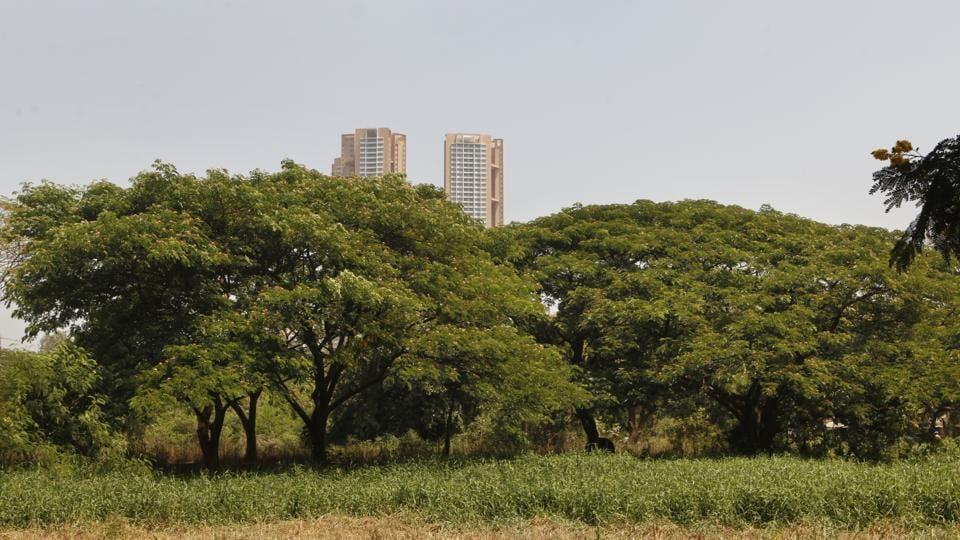 Aarey,Aarey forest,Mumbai forest