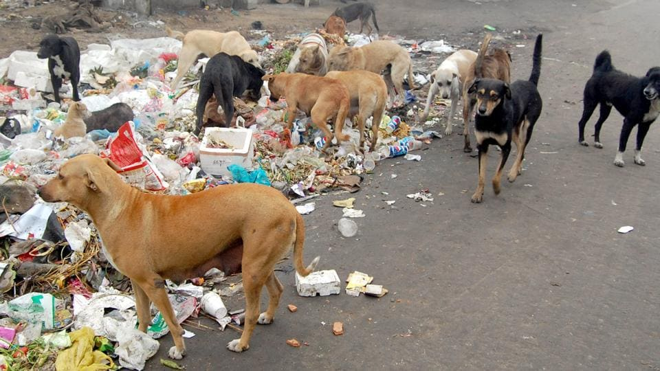 100 stray dogs allegedly poisoned in Hyderabad | telangana