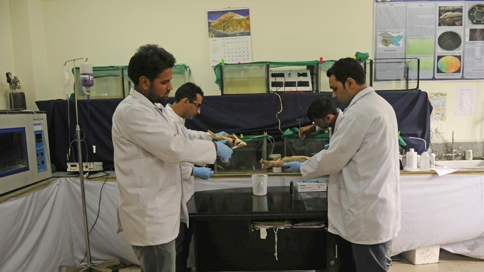 Fisheries experts from SKUAST faced a common complaint from farmers during a survey of fish farms in Jammu and Kashmir. They would complain that species like trout were dying of unknown reasons. The experts were soon able to put a finger on the cause when they found pathogens like Trypanosoma had made their way into Kashmir's colder waters. The blood parasite is mostly found among fish in tropical areas. (Waseem Andrabi / HT Photo)