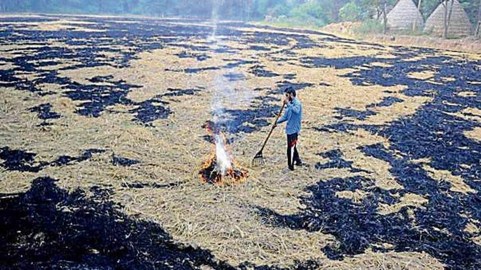Punjab,stubble burning,Punjab farmers