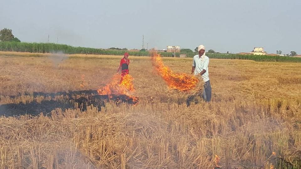 haryana,stubble burning,straw burning