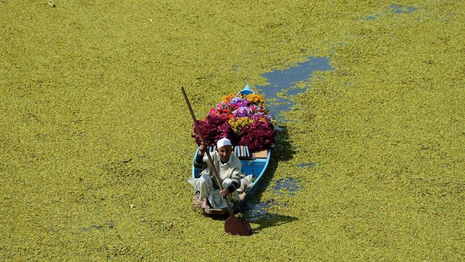 A Kashmiri flower vendor paddles his boat along Dal Lake in Srinagar, Jammu and Kashmir. (Sajjad Hussain / AFP)