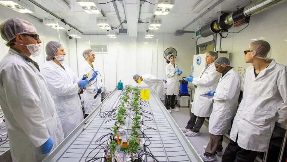 Bill MacDonald, program coordinator of the new Commercial Cannabis Production Program at Niagara College, instructs his students inside the marijuana lab. As Canadians usher in the legalization of recreational cannabis this week, 24 students are becoming the first in the country to get formal credentials in growing pot. (Carlos Osorio / REUTERS)