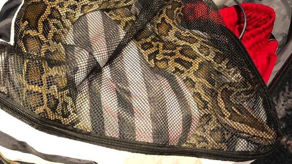 Snake Snkae A Bag Amsterdam