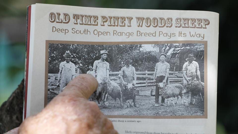 Bill Frank Brown points out an ancestral photo from a trade magazine on his farm in Poplarville. Brown was 14 when he inherited the farm. The farm had three stallions when Sponenberg visited it in 2005, including DeSoto. (Gerald Herbert / AP)