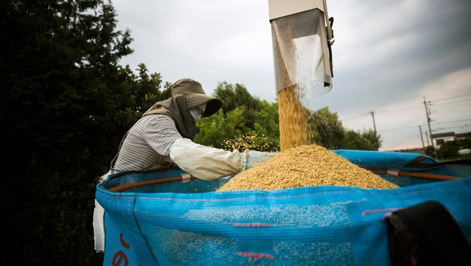 Japanese farmer Toshiko Ogura loads harvested rice by a combine in Kazo city, Saitama prefecture. Rice consumption has nearly halved over the past 50 years, and as the older generation of farmers and consumers dies out, some fear the industry will be unable to hold its own in a competitive global market. (Behrouz Mehri / AFP)