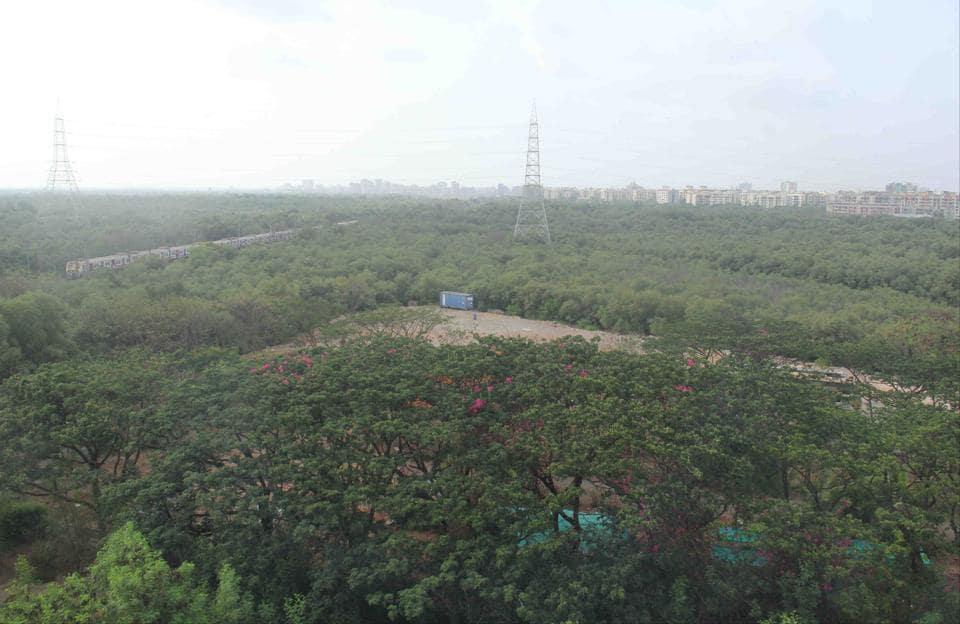 Mumbai,Maharashtra,Mangrove